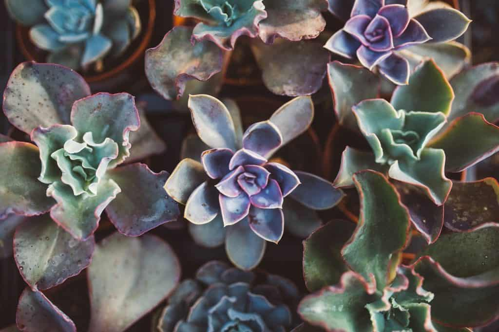 When Succulents Get Wrinkly