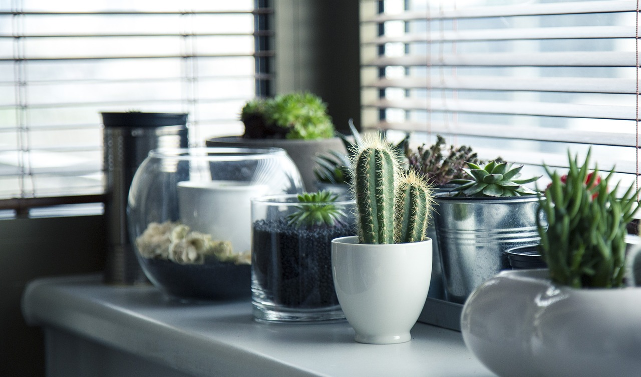 Best Succulents for Indoors
