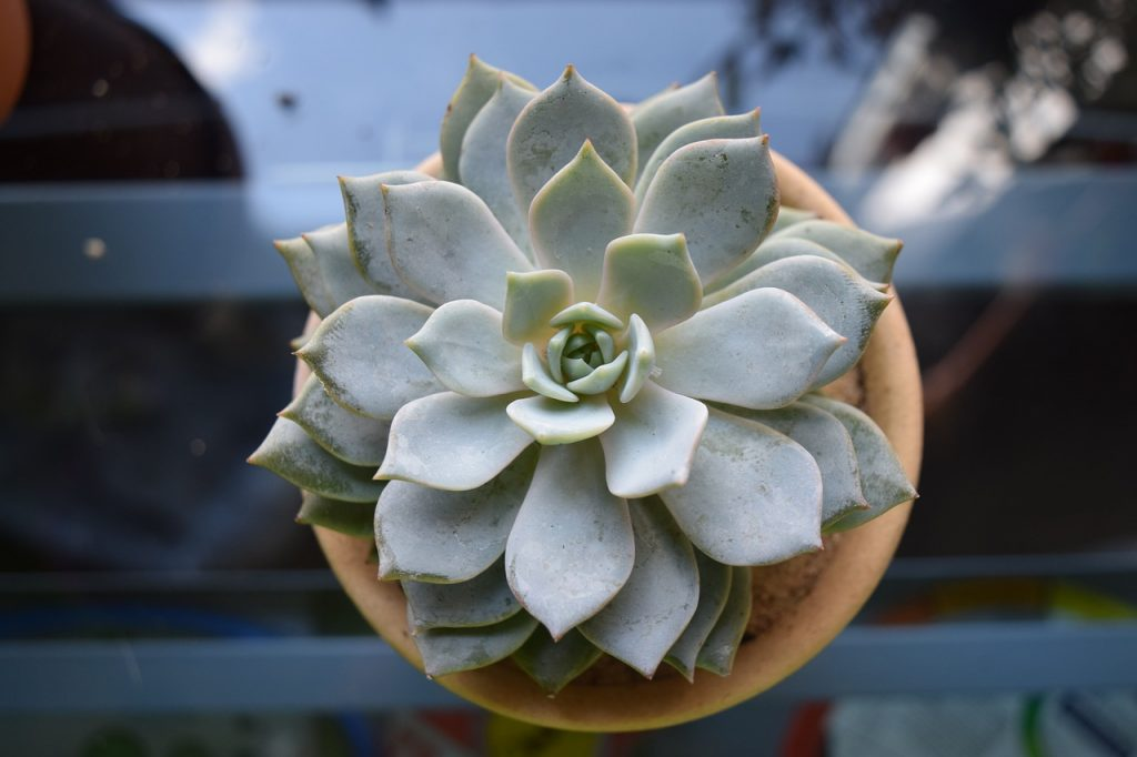 Can You Plant Succulents In Pots Without Holes
