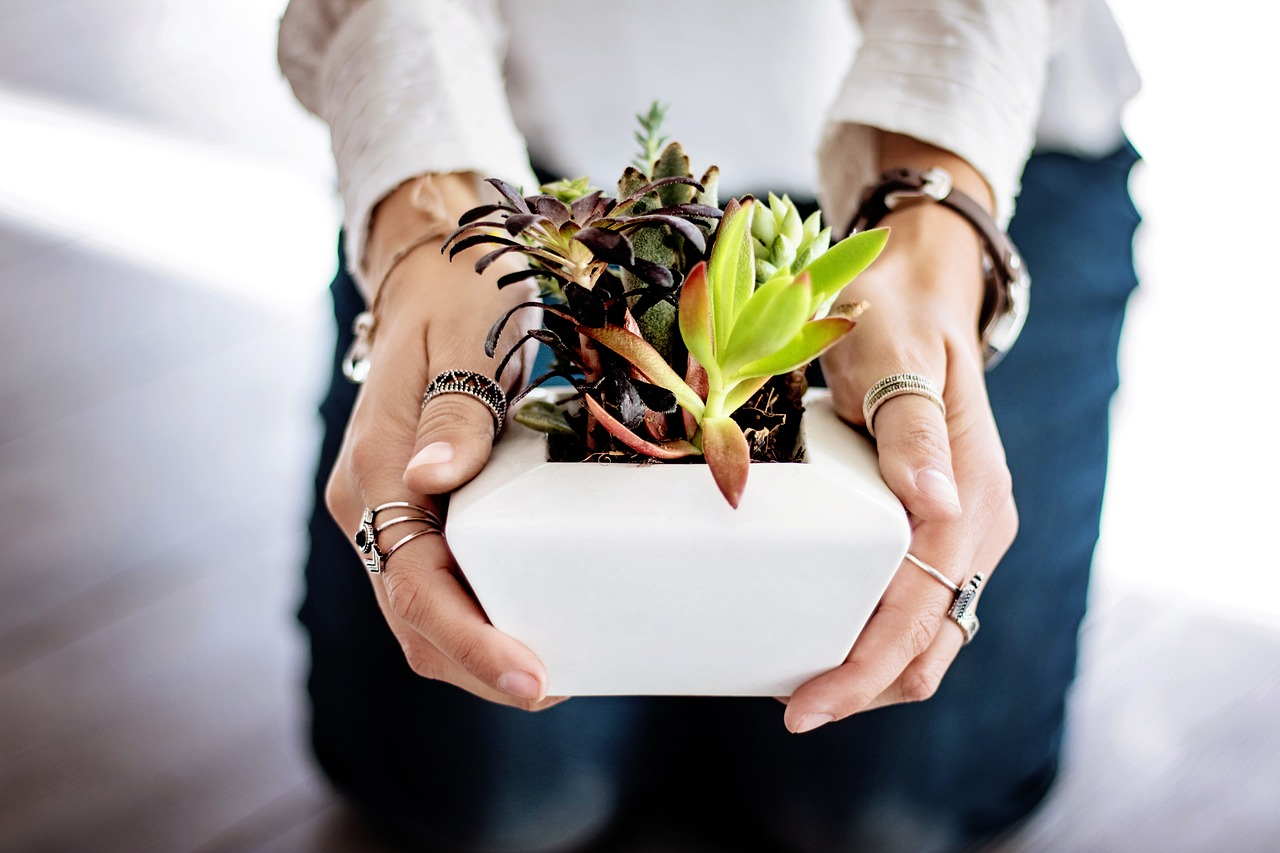 Repotting Overgrown Succulents