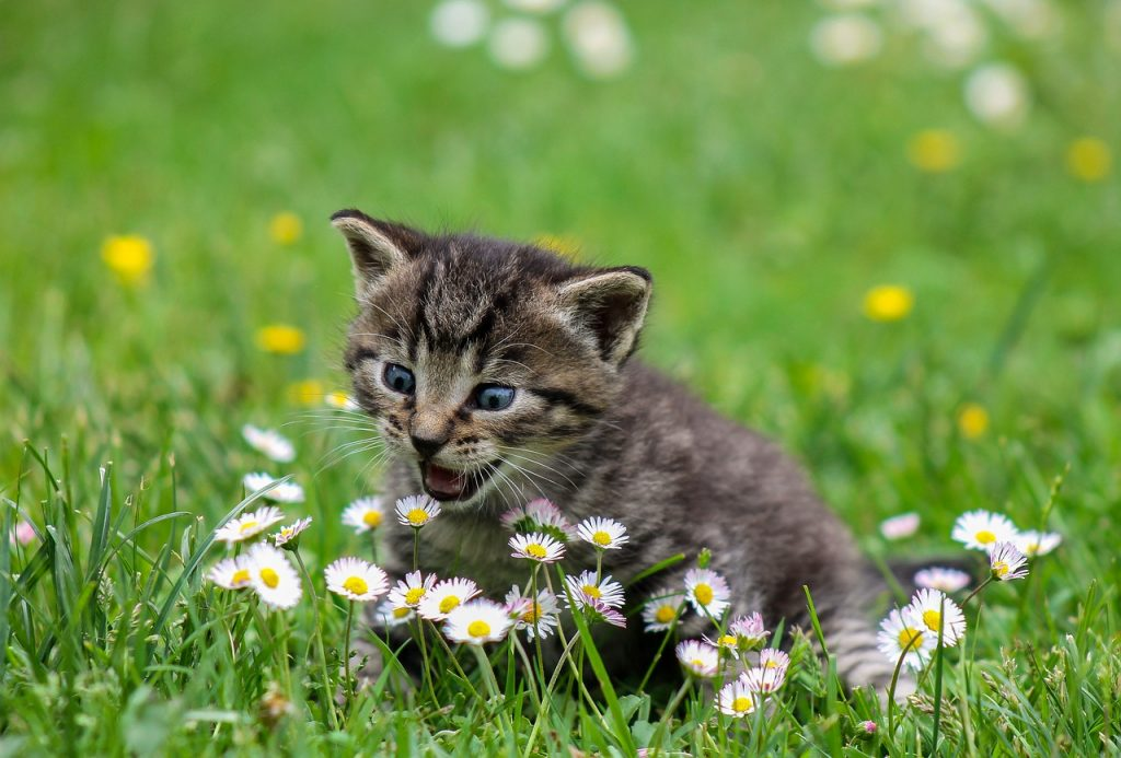 What Succulents Are Safe for Cats