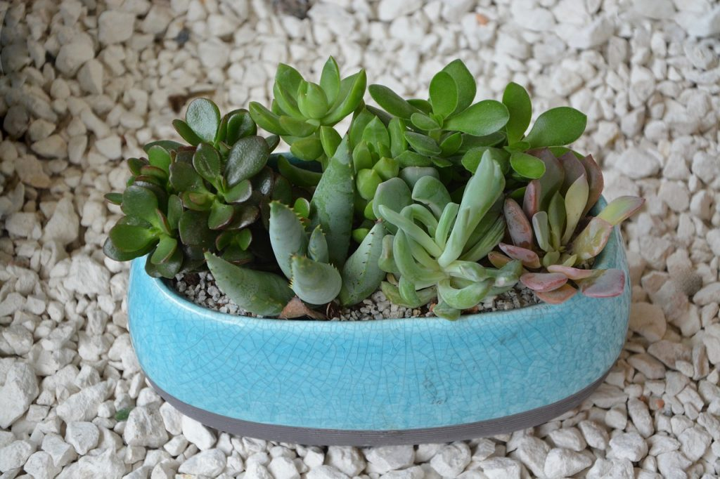 Best Soil for Succulents in Pots