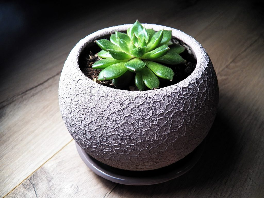 How to Care for A Succulent Indoors