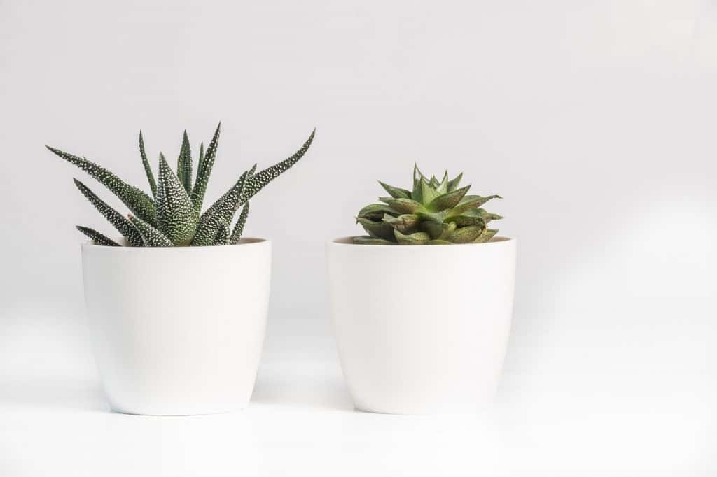 Can Succulents Survive in Bathrooms