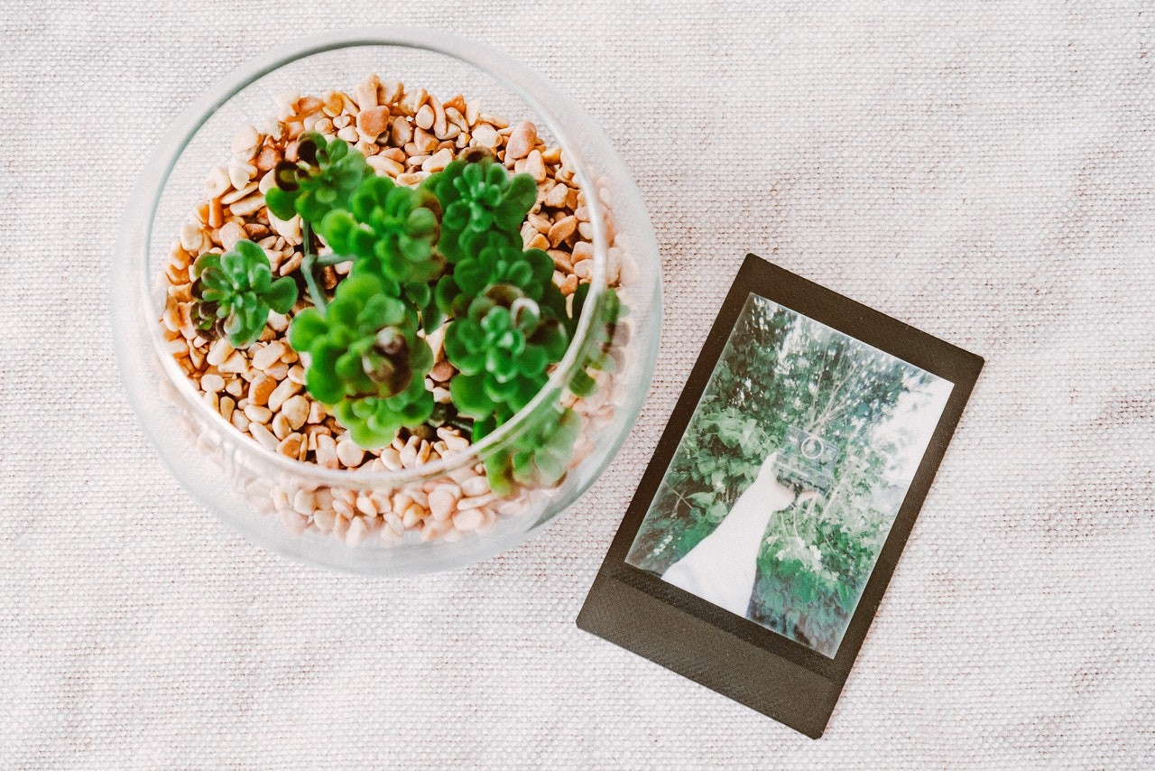 Can I Plant Succulents in a Glass Bowl?