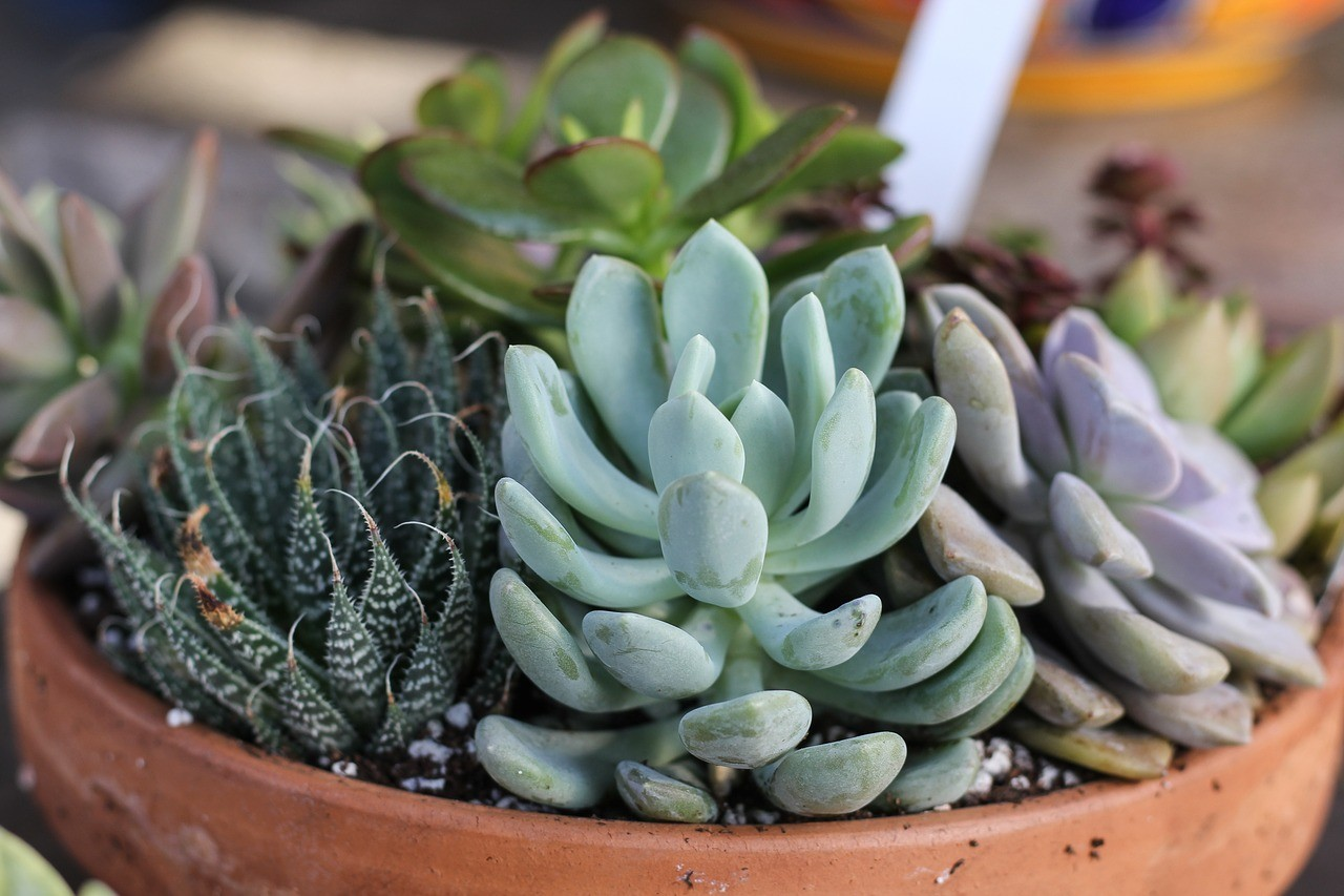 Can I Use A Bowl As A Planter For My Succulents Succulents Grower