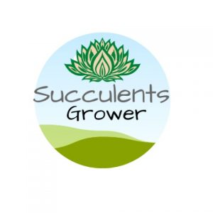 Succulents Grower