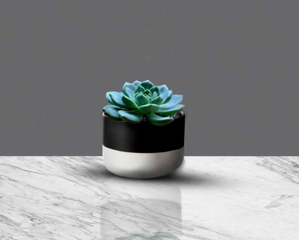 What Pots Are Good for Succulents