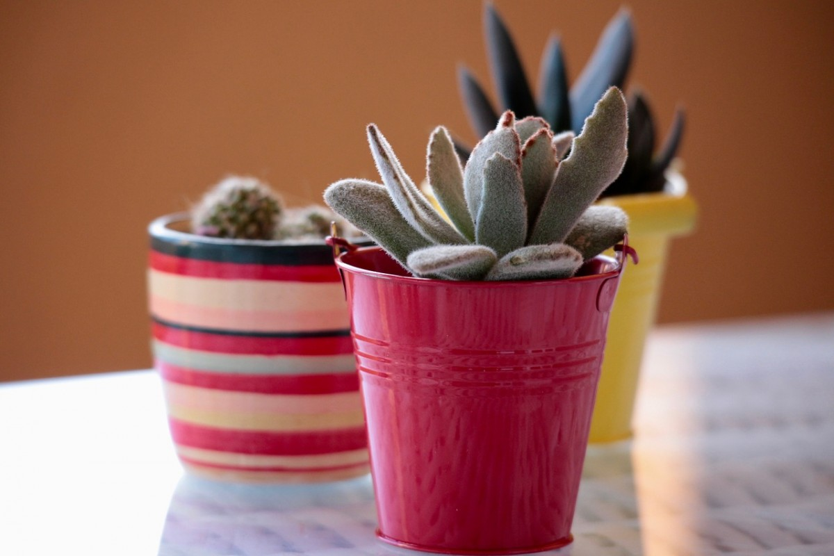 Can Succulents Grow in Small Pots