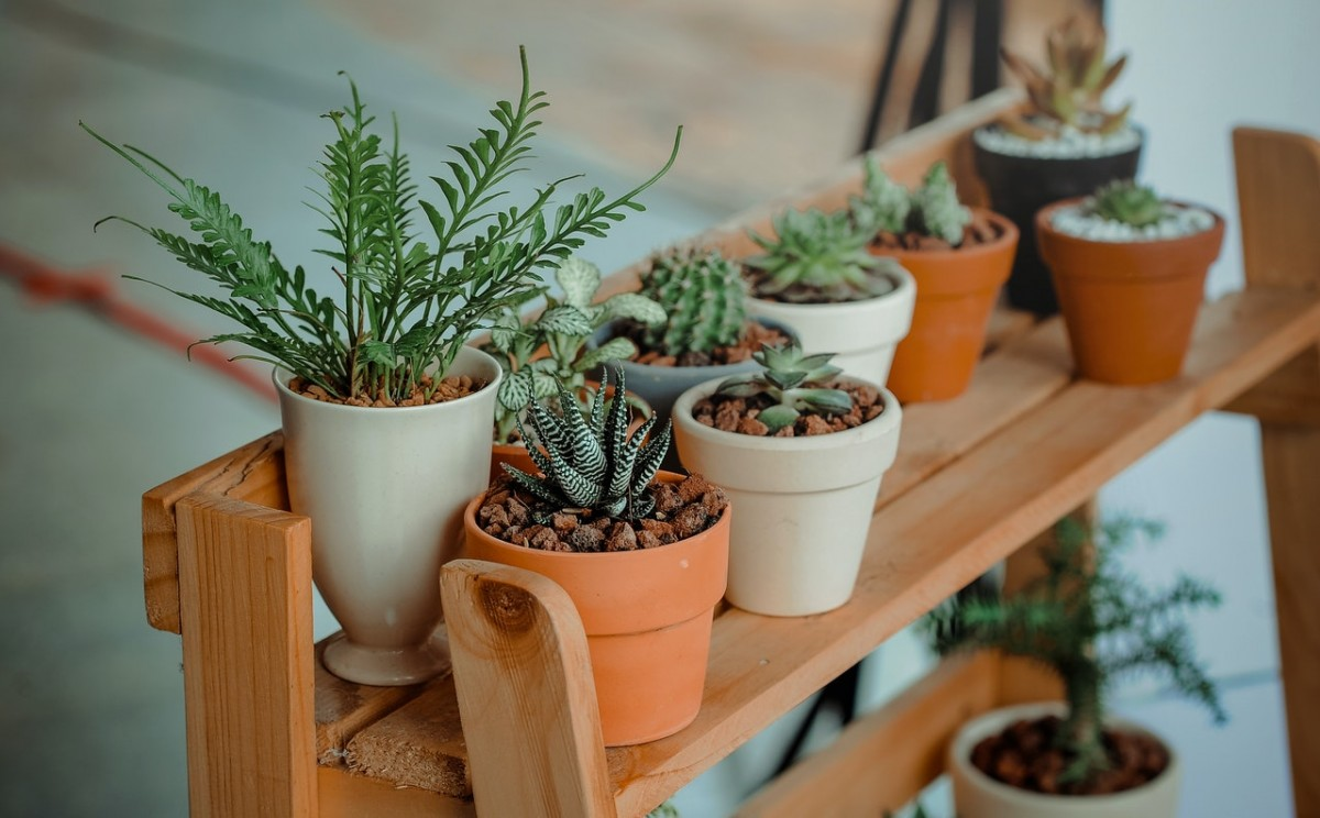 Watering Succulents After Planting